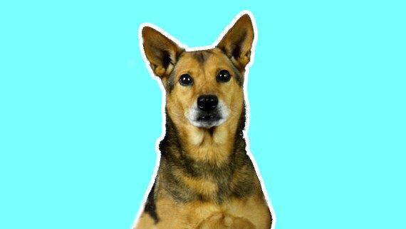 Vida de perro - Spanish Listening Activity